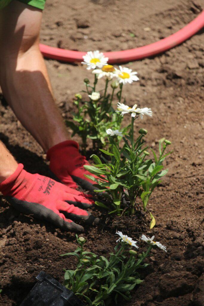 Trees, Gardens & Plantings